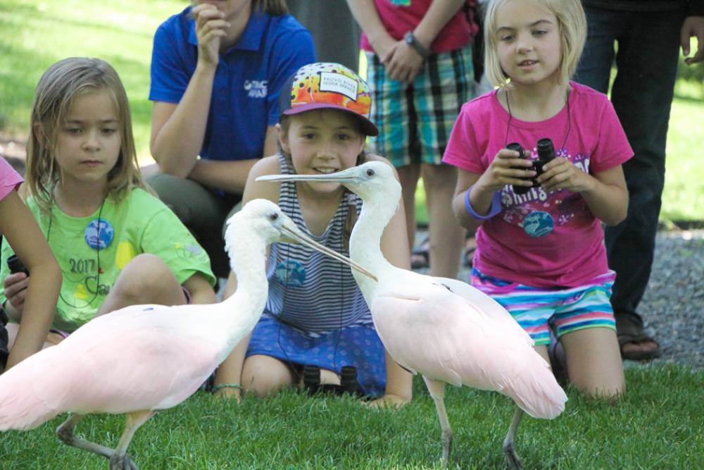 TOP UTAH SUMMER CAMP: Avian Adventure Summer Camps is a Top Summer Camp located in Salt Lake City Utah offering many fun and enriching camp programs.